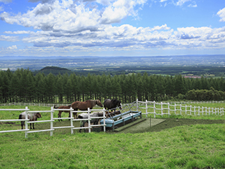 自社農場『崎枝農場』『幸福牧場』